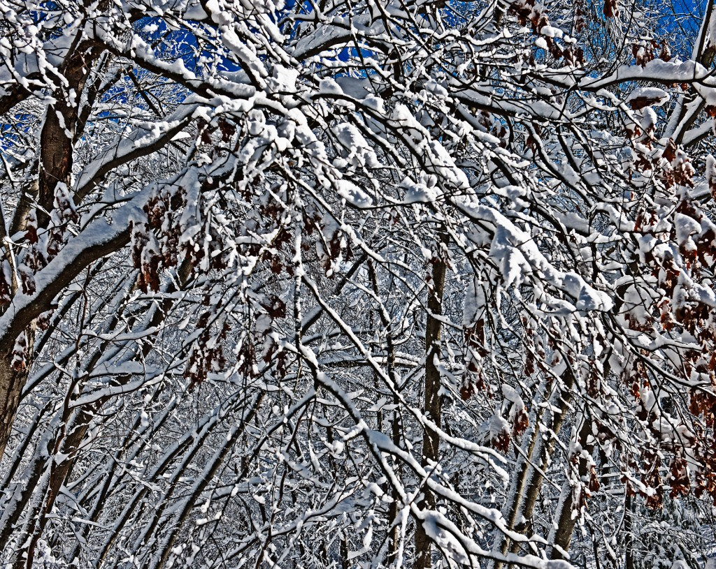The Cold Chaos of Winter