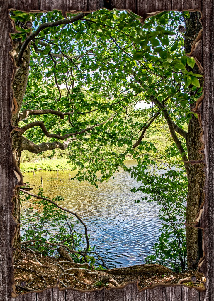 Pond on old wood