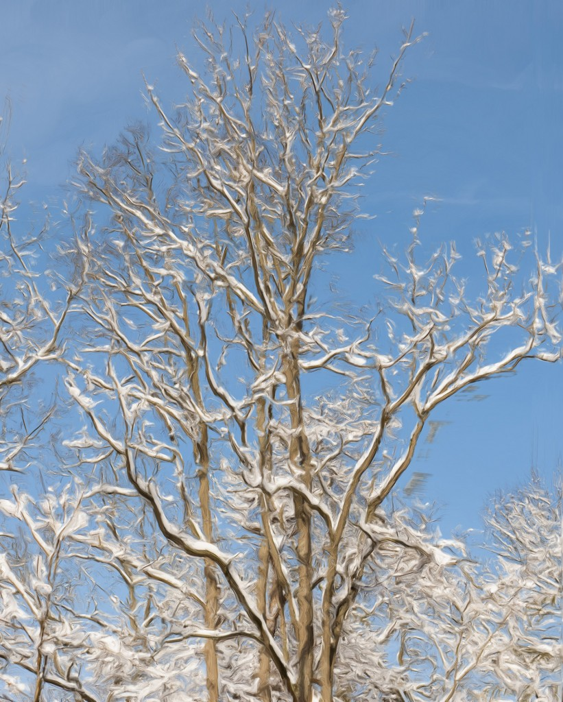 Snowy branches (Homage to Van Gogh)